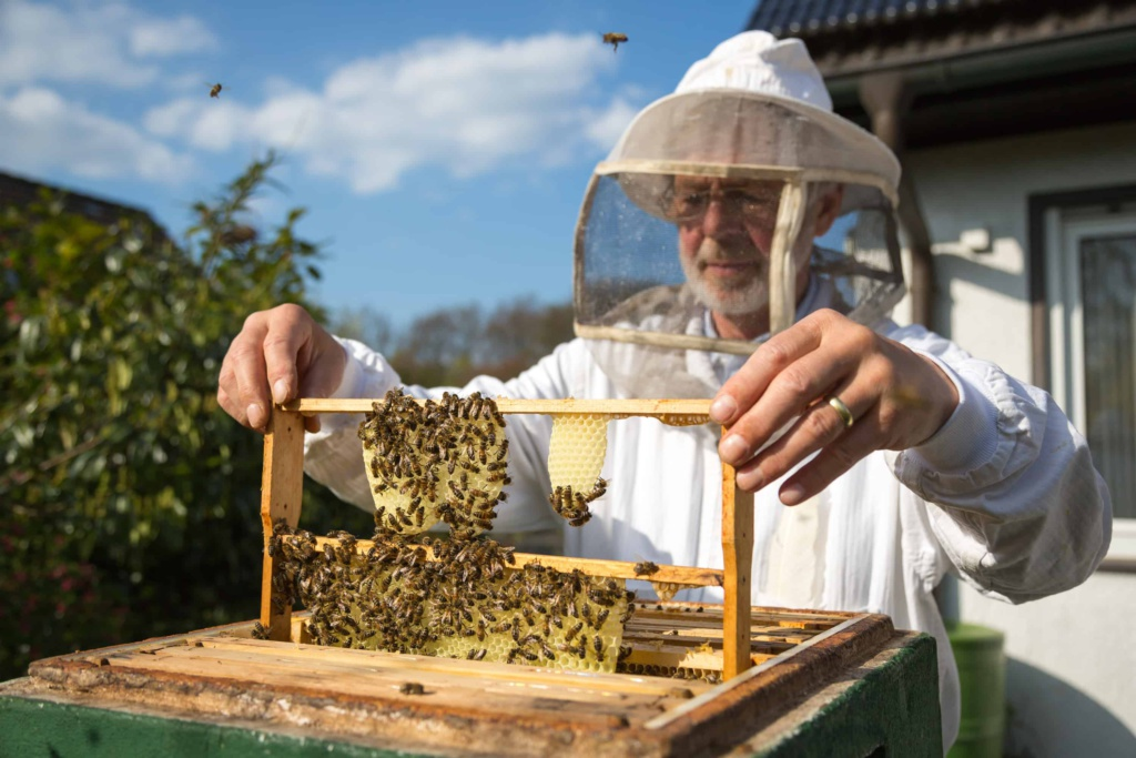 Arundel Bee Project